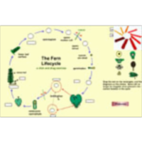 Plant Life Cycles, Photosynthesis, and Other Learning Objects icon