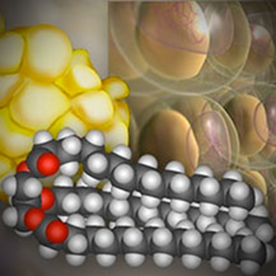 Molecular Structure of Fat | HHMI BioInteractive icon