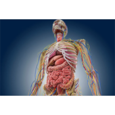 An Online Examination of Human Anatomy and Physiology