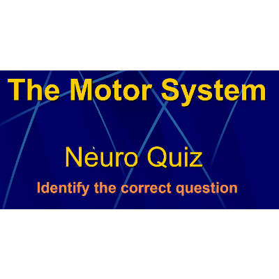 The Motor System: Quiz Game