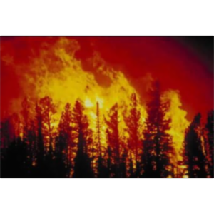 CSUB-NASA 2008: U.S. Wildfires and Fire Safety with Smokey the Bear icon