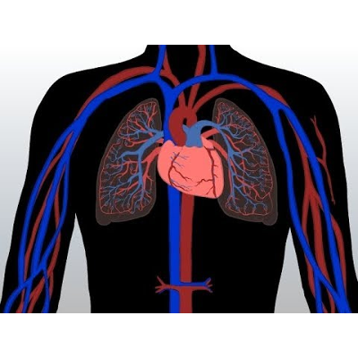 Blood Flow Through The Body (Composition and Functions of the Blood) Animated Rap Song icon