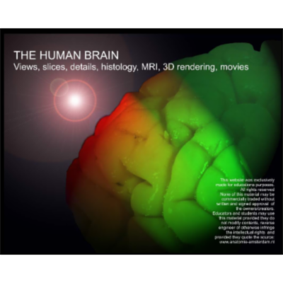 The Human Brain icon