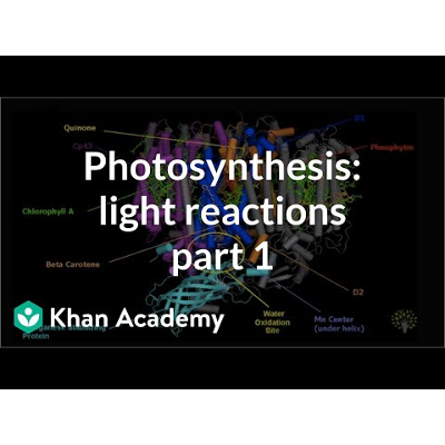 Photosynthesis: Overview of the light-dependent reactions