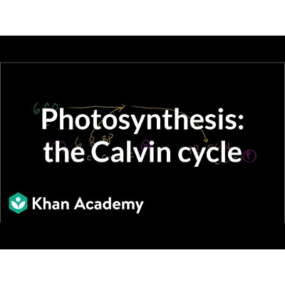 Photosynthesis:  Calvin cycle icon