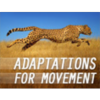Adaptations for Movement icon