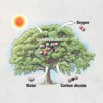 Photosynthesis Animation and Lesson icon