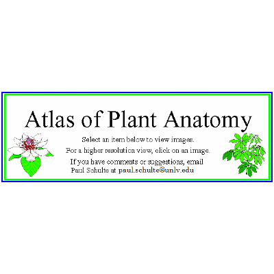 Atlas of Plant Anatomy icon