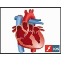 Blood Flow through the Human Heart icon