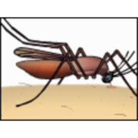 Malaria: Cooperation among Parasite, Vector, and Host