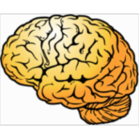 How Your Brain Works icon