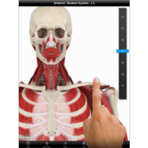 Student Muscle System App for iPad icon