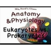 The Human Cell (03:02): Eukaryotes vs. Prokaryotes