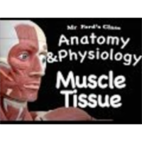 The Muscular System : Muscle Tissue (09:01)