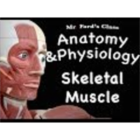 The Muscular System : Skeletal Muscle (09:02) icon