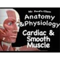 The Muscular System : Cardiac and Smooth Muscle (09:04)