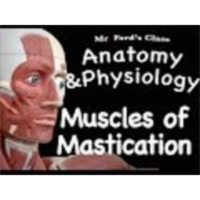 The Muscular System : Muscles of Mastication (09:10) icon