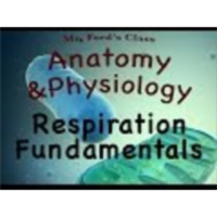 Cellular Metabolism For Anatomy and Physiology : Respiration Fundamentals (04:02) icon