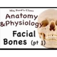 The Skeletal System : Facial Bones pt 1 (07:07) icon