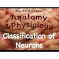 Nervous System: Classification of Neurons (10:03)