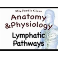 The Lymphatic System : Lymphatic Pathways (15:02)