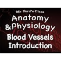 The Cardiovascular System : Introduction to Blood Vessels (14:08) icon
