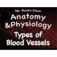 The Cardiovascular System : Types of Blood Vessels (14:09) icon
