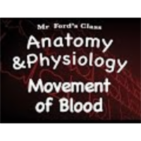 The Cardiovascular System : Movement of Blood (14:11)