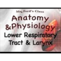 The Respiratory System : Lower Respiratory Tract and Larynx (16:03) icon