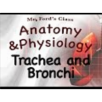 The Respiratory System : Trachea and Bronchi (16:04)