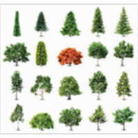Studies of Trees icon