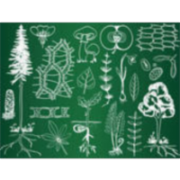 Beginners' Botany icon