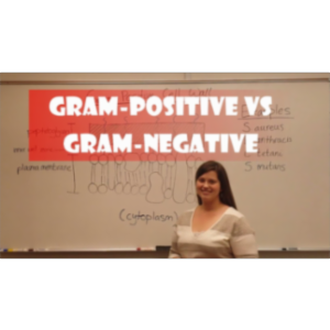 Video: Gram Positive Bacteria vs Gram Negative Bacteria icon
