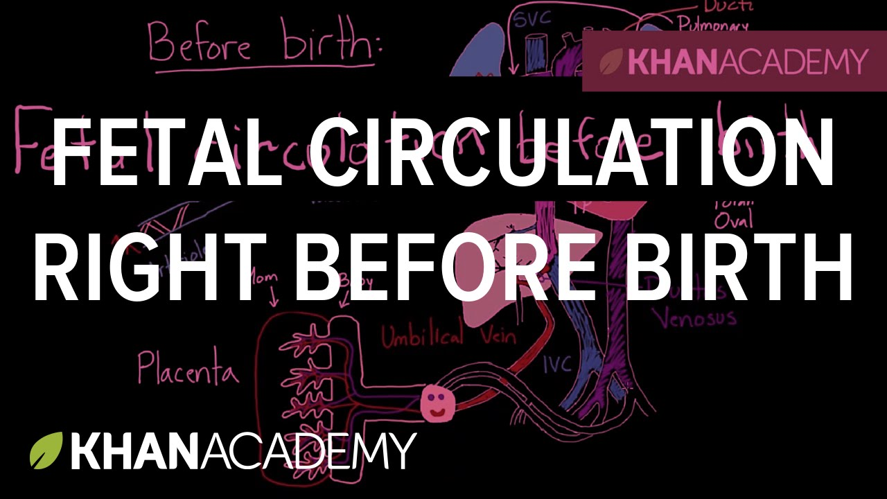 Fetal circulation right before birth | Circulatory system physiology | NCLEX-RN | Khan Academy icon