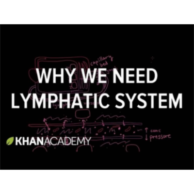 Why we need a lymphatic system icon