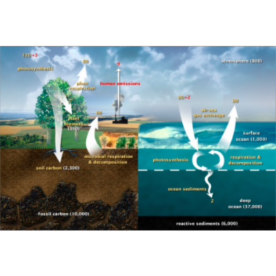 Promoting Climate Change Literacy for Non-majors: Implementation of an atmospheric carbon dioxide modeling activity as an inquiry-based classroom activity | CourseSource icon