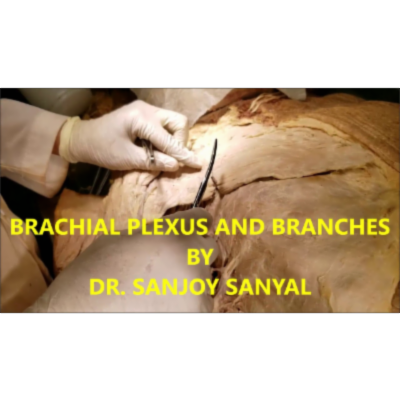 Brachial Plexus and Branches HD Demonstration in Axilla – Sanjoy Sanyal