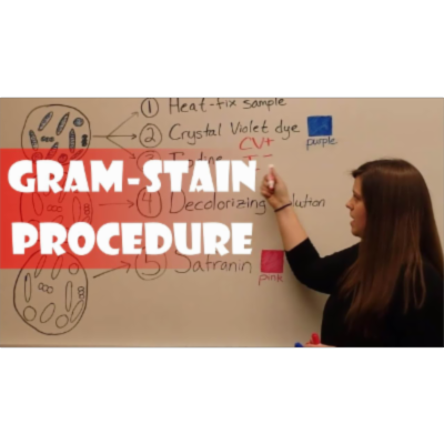 Gram Stain Procedure (Video) icon