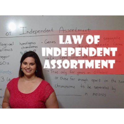 Mendel's Law of Independent Assortment icon