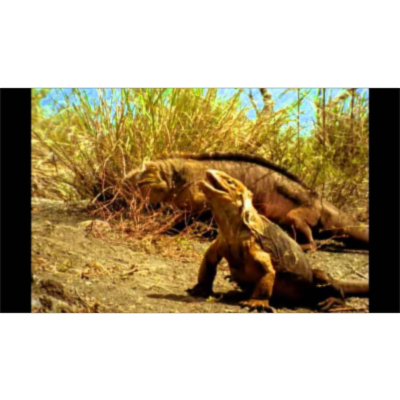 Galapagos Islands National Geographic icon