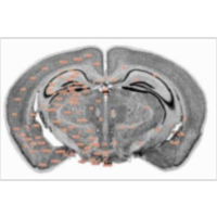 The Mouse Brain Library icon