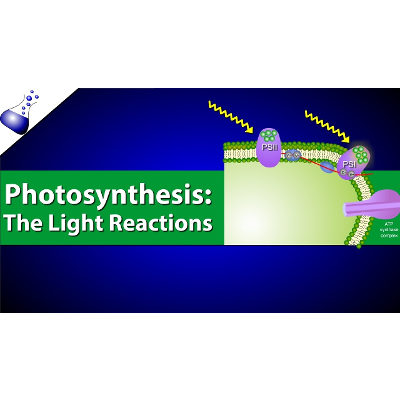 The Light Reactions of Photosynthesis Video icon
