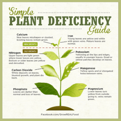 Identifying Plant Nutrient Deficiencies – Grow Real Food | Living An Organic, Non-GMO Real Food Life! icon