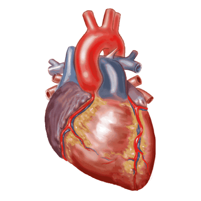 Pediatric and Congenital Heart Disease icon