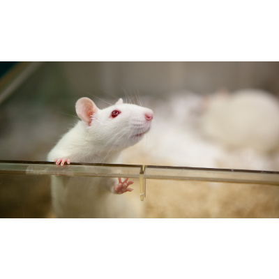 From Rats To Humans, A Brain Knows When It Can't Remember icon