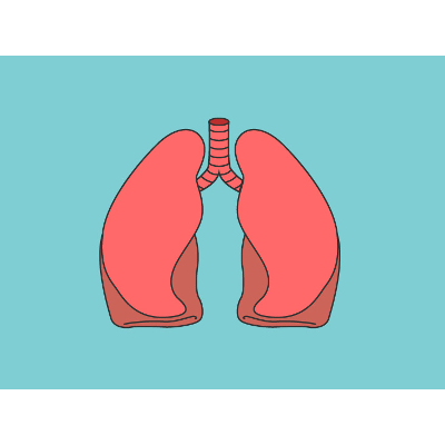 Lung Anatomy, Function, and Diagrams icon