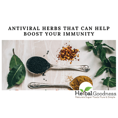 Antiviral Herbs That Can Help Boost Your Immunity | Herbal Goodness icon