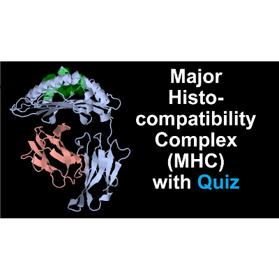 Major Histocompatibility Complex MHC Protein Structure and Function icon