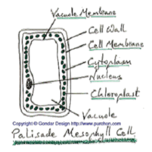 Gondar Design Biology icon