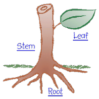 Plant Anatomy Atlas icon